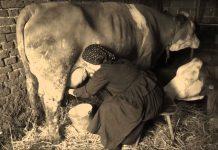 domaće-mlijeko